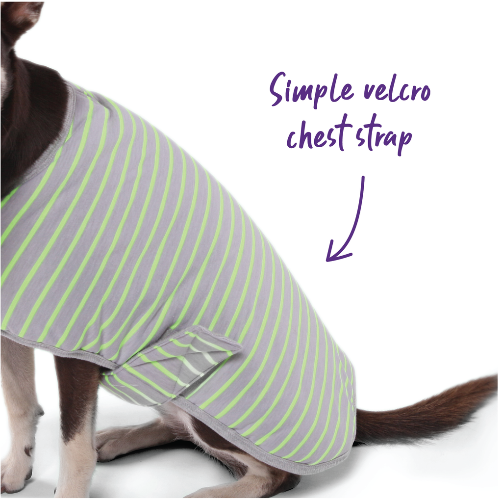 Striped Snuggie - Lime - Kazoo Pet Co