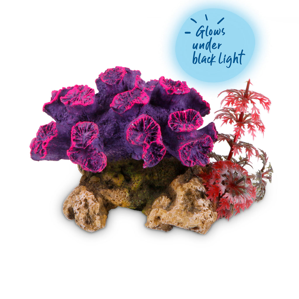 Coral With Plant