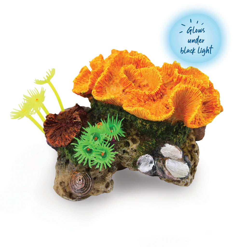 Assorted Coral With Plants