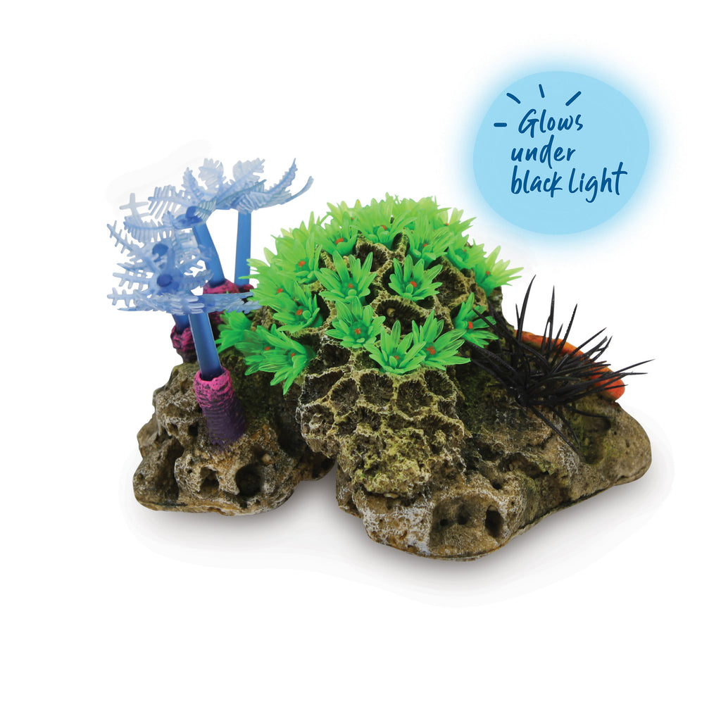 Soft Coral With Sea Urchin