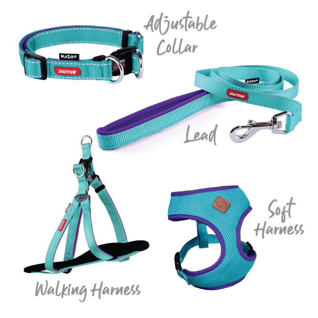 Active Adjustable Collar - Aqua & Purple - Kazoo Pet Co
