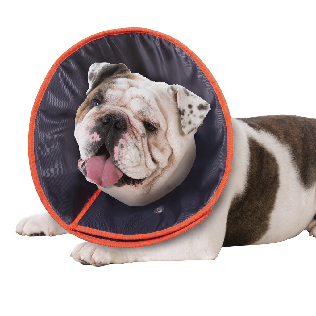 Comfy Recover Collar - Kazoo Pet Co