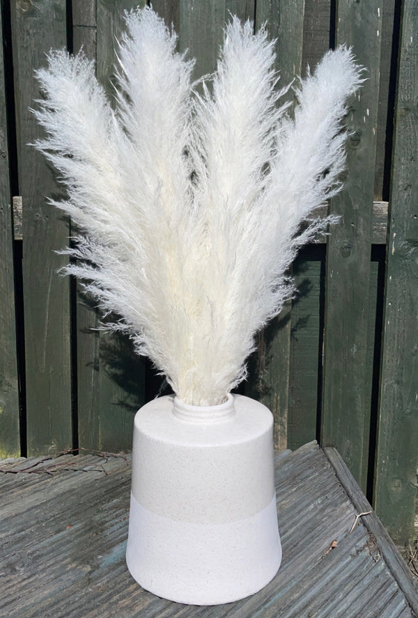 White Large Pampas Grass