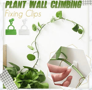 Plant Wall Climbing Fixing Clips (10PCS/50PCS) - ZZSales