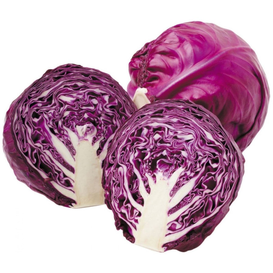 Red Cabbage F-1 Hybrid Red Ball