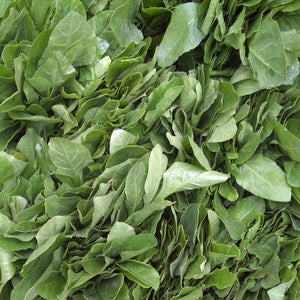 Palak - Urja Green (Spinach) - Vegetable Seeds