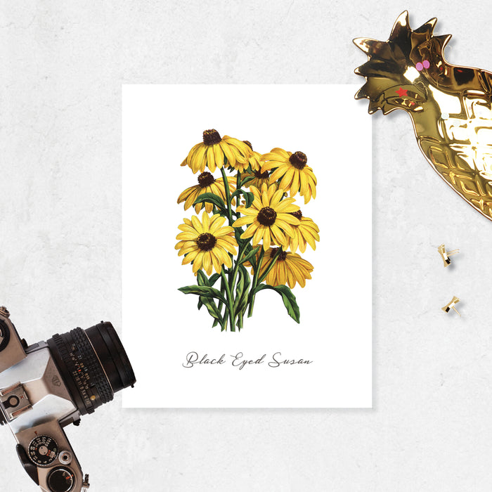 black eyed susan flowers on matte white paper with the words Black Eyed Susan at the bottom