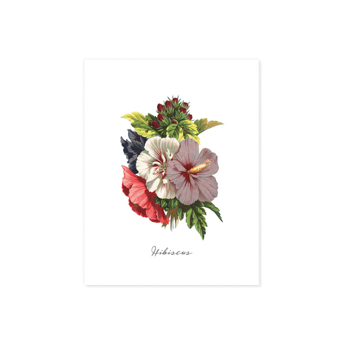 tropical hibiscus in reds, white, and lavender above the word hibiscus printed on matte white paper