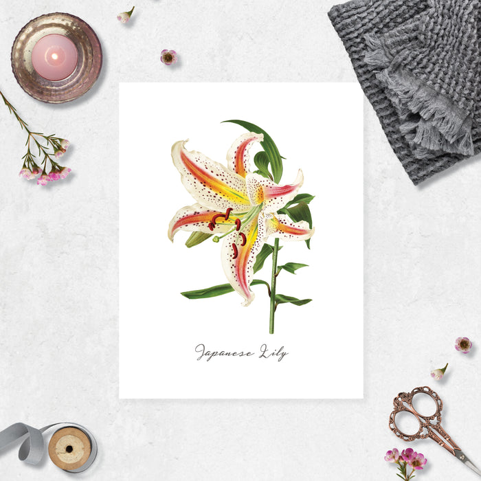 Watercolor Japanese Lily with the text Japanese lily under the image on matte white paper