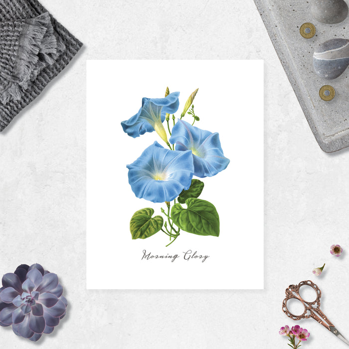 watercolor morning glory flowers in blue with green leaves with text morning glory at the bottom printed on matte white paper