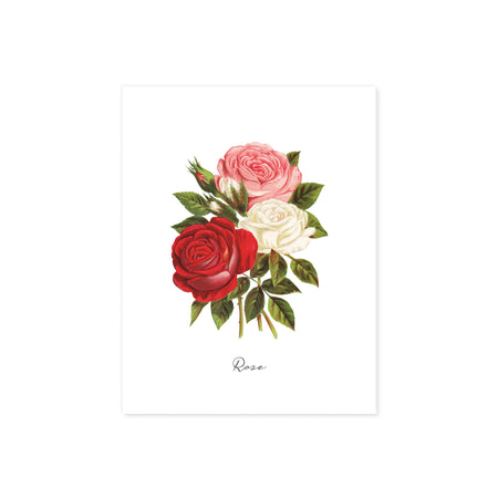 watercolor roses in pink, white, and red with greenery with the word rose at the bottom printed on matte white paper