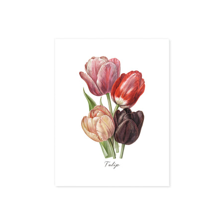 tulip flowers in watercolor shades of pale peach to pink to red and plum colors with word tulip underneath printed on matte white paper