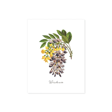 wisteria in pale plum and yellow watercolors with greenery printed on matte white paper