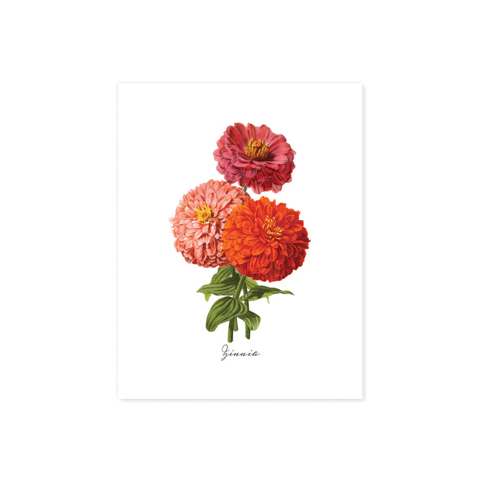 zinna flowers in pinks peach and orange with greenery and the word zinna at the bottom printed on matte white paper