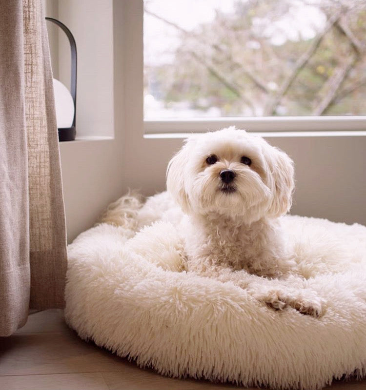 a cute small white terrier laying in the marshmallow bed