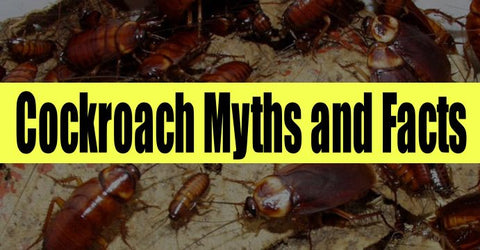 cockroach myths and facts
