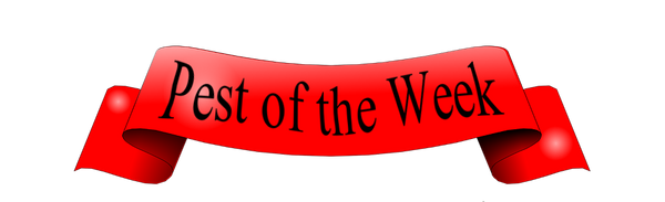 Pest of the Week banner