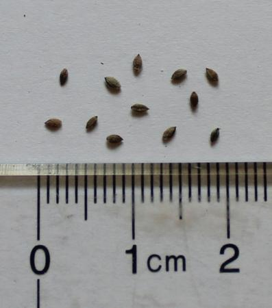 crabgrass seeds