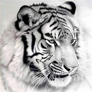5D DIY FULL DRILL DIAMOND PAINTING TIGER (BLK&WHITE) / DIAMOND PAINTING MNL