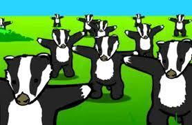 We love Badgers!