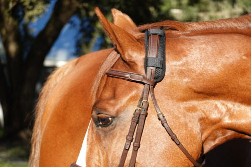Preventing Tightness in Your Horse's Poll