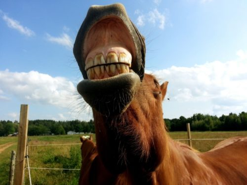 Equine Dental Care: The Need-to-Know