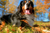 Breed Spotlight: Bernese Mountain Dog