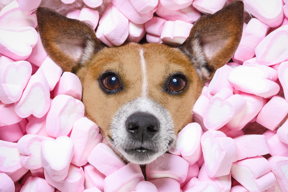 Celebrating Valentine's Day With Your Dog