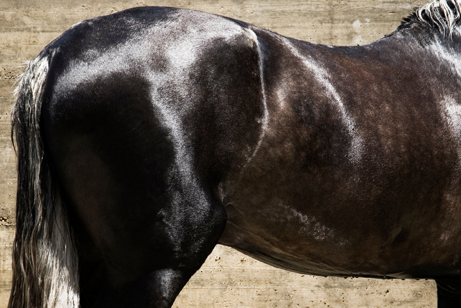 How to Achieve a Shiny Coat Naturally for Your Horse