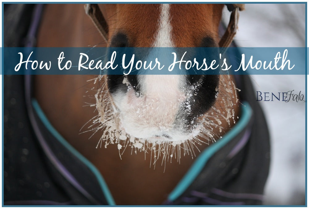 Horse Behavior: How to Read your Horse's Mouth