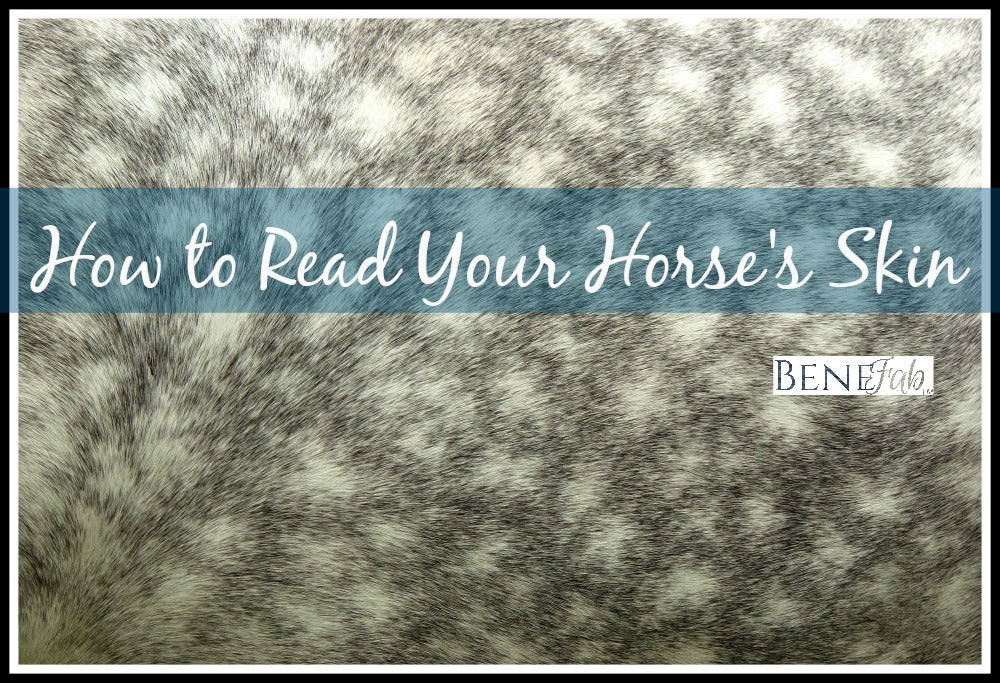 Horse Behavior: How to read your horse's skin