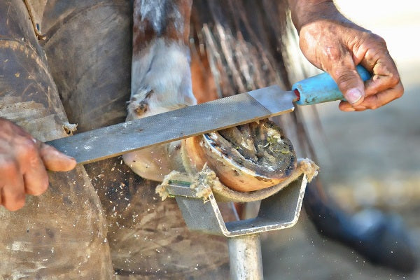 National Farrier's Week