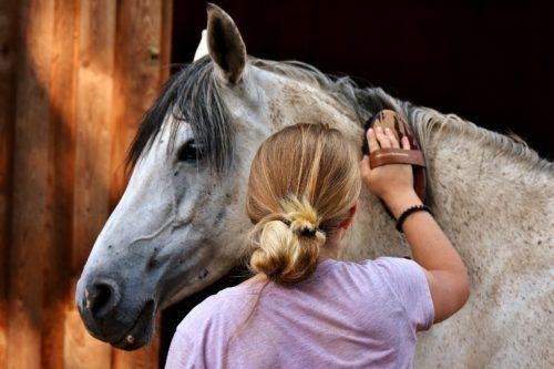 Ways to help your Horse Shed out for Spring