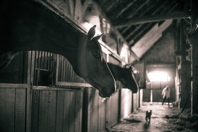 5 Things to Look For in a Horse Boarding Facility