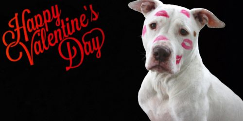 Pampering your Dog's for Valentine's Day