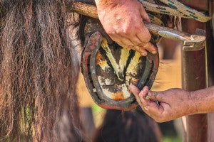 How to find a skilled farrier