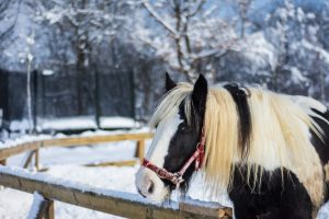 cold temperatures affect our horses