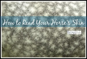 dappled horse skin background texture