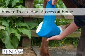 How to Treat a Hoof Abscess at Home