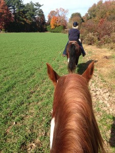 Going from Show Horse to Trail Horse Safely