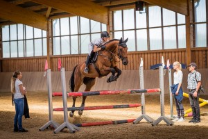 Five Things to Look for in a Horse Trainer