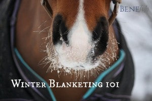 Winter Blanketing 101