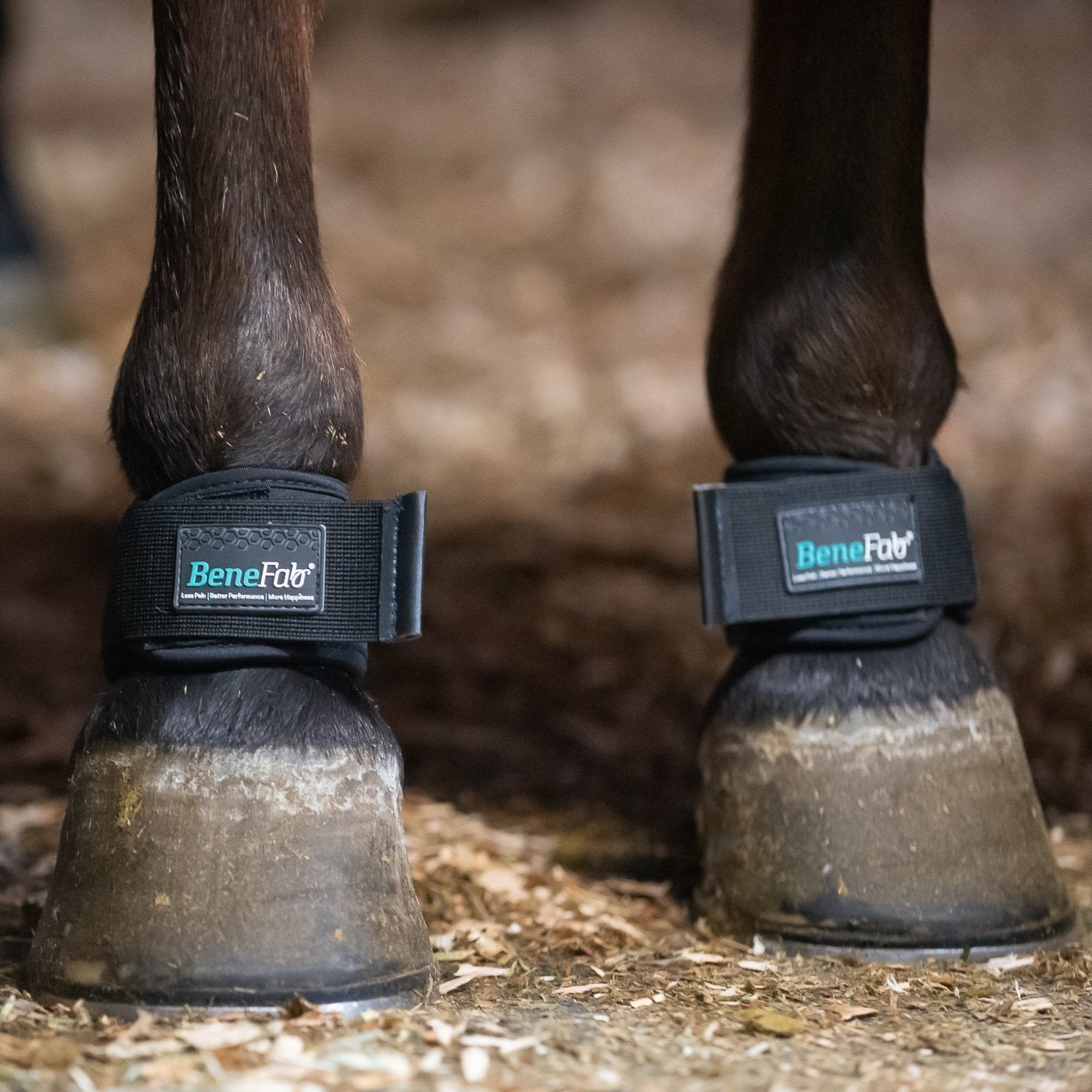 Therapeutic Pastern Wraps
