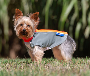 Open image in slideshow, bArctic Cooling + Light Therapy Dog Shirt