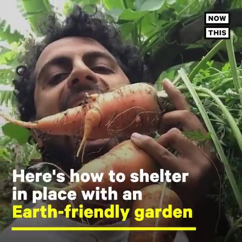 [VIDEO] NowThis: How to Start a Regenerative Garden At Home