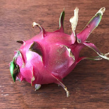 Load image into Gallery viewer, Dragonfruit, White Vietnamese (cuttings)