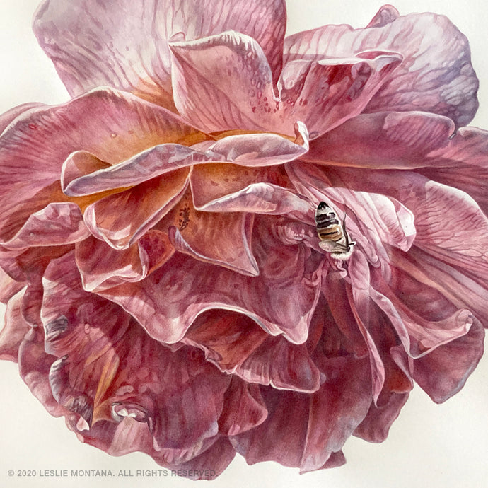 Pink Rose Blossom, Watercolor Painting & Visual Flower Essence