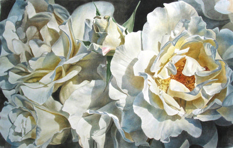 Cream Roses watercolor painting by Leslie Montana