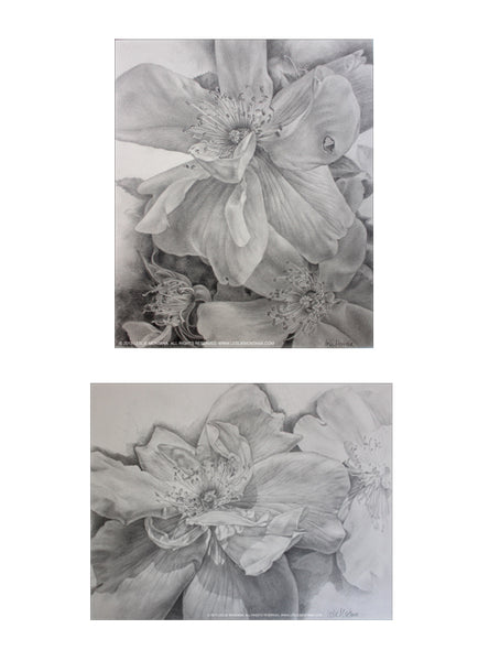 Roses done in graphite, pencil drawings by Leslie Montana