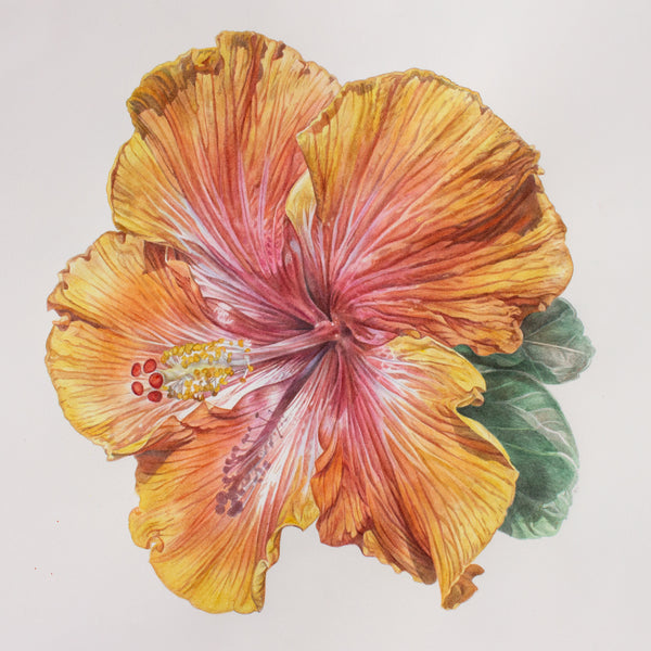 Hibiscus in Yellow Orange watercolor painting by Leslie Montana